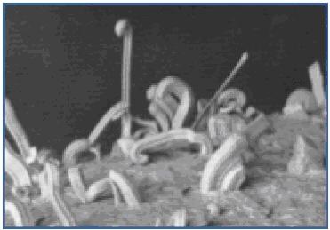 Пример изгибающихся усов олова под микроскопом